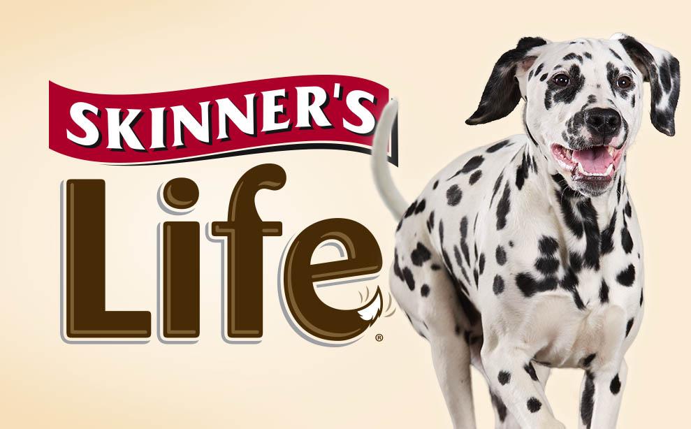 Skinner's Life branding and packaging